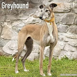 Best greyhound calendars 2019 Reviews