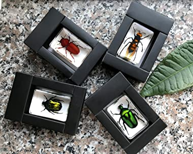 QTMY Insect in Resin Specimen Collection Paperweight for Office Desk,Christmas for Men Women Biology Science Teacher Educatio