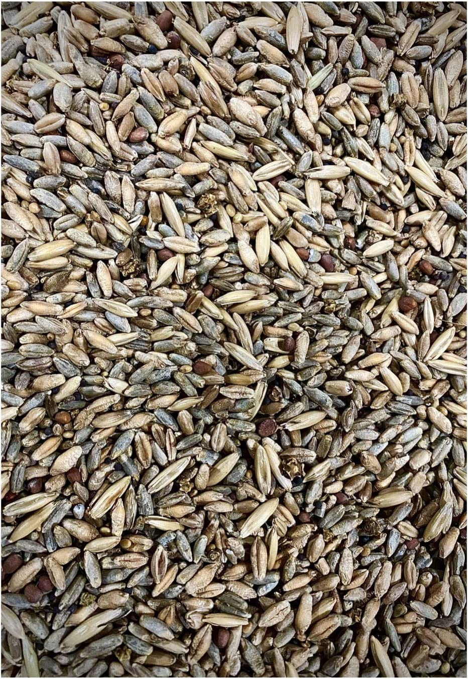 25lb Whitetail 新品■送料無料■ Deer Food 市販 Plot Seed Beet Cl Turnip Radish Sugar