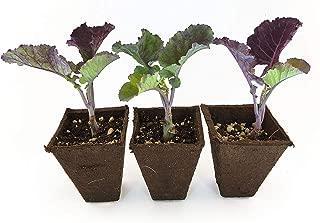 Best purple tree collard Reviews