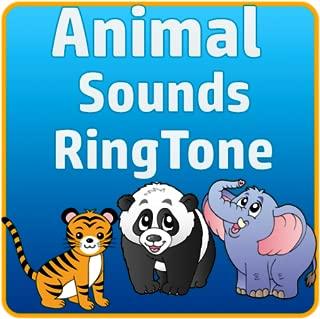 Real Animal Sounds Ringtones