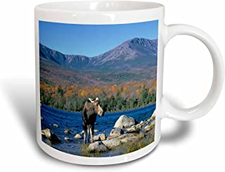 3dRose Cow Moose, Wildlife, Mt. Katahdin, Baxter SP, Maine, Howie Garber, Ceramic Mug, 11-Oz