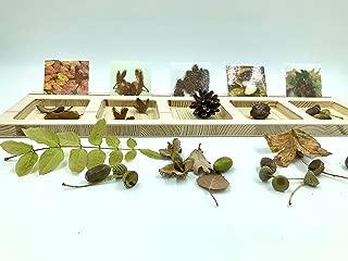 Sortierbrett mit 36 Karten Sortieren Naturmaterialien Montessori Waldorf Pikler Zahlen Farben Formen Rechnen Handmade Holz Holzspielzeug Lernen Förderung