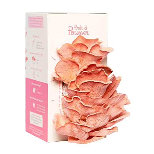 Pink Oyster Mushroom Kit - Grow Your Own Organic Mushrooms In Just 10 Days