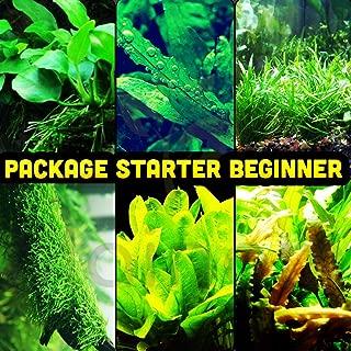 Mainam 30+ Stems Package Starter Beginner Set Live Aquarium Plants Java Moss, Micro..