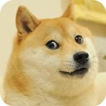 100 doge