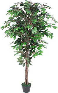AMERIQUE Gorgeous Ficus Capensia Artificial Tree Silk Plant with Twisted Trunks, UV Protection, Nursery Plastic Pot, Feel Real Technology, Super Quality, 5.3'/63