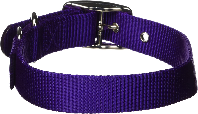 Hamilton 1Inch Single Thick Nylon Deluxe Dog Collar, 20Inch, Purple