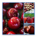 Apples Backgrounds