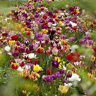 Best tulip bulb gift set Reviews
