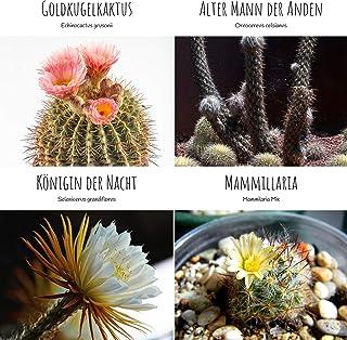 Exóticas semillas de cactus con alta tasa de germinación - Set de semillas suculentas para su propio hermoso cactus en flo...