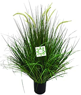 Artificial Pampas Grass Plant 80cm   Nearly Natural