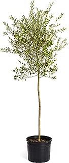 Best top leaf tree service az Reviews