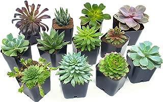 Best pet memorial plant pots Reviews