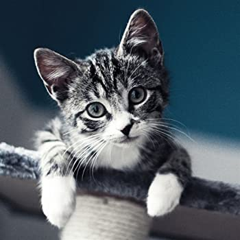 Cute and funny cats