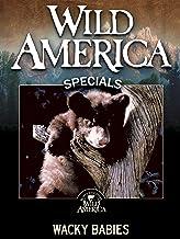 Wild America: Wacky Babies