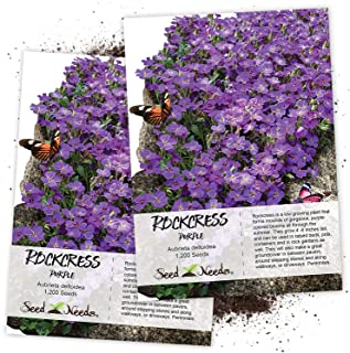 Seed Needs, Purple Rockcress Groundcover (Aubrieta deltoidea) Twin Pack of 1,200 Seeds Each