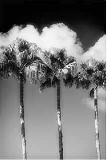 Bilderwelten Pizarra magnética - Palm Trees In Front of The Sky Black and White 60x40cm