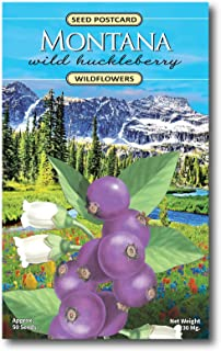 Montana Huckleberry Wildflower Seed Packet - Enjoy The Natural Beauty of Montana Flowers in Your Own Home Garden