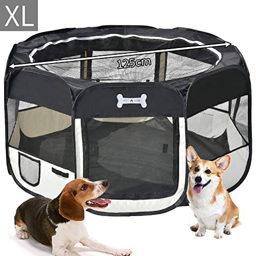 Cachorros de Perros: Amazon.es