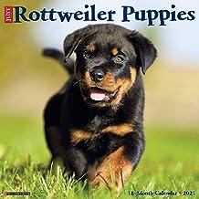 Just Rottweiler Puppies 2021 Wall Calendar (Dog Breed Calendar)
