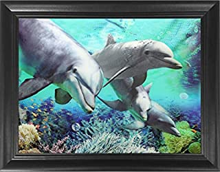 christmas dolphins pics