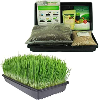 Best large sack of grass seed Reviews