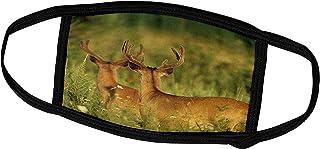 3dRose White-Tailed Deer, Odocoileus virginianus, Bucks in Velvet. - Face Covers (fc_260054_2)