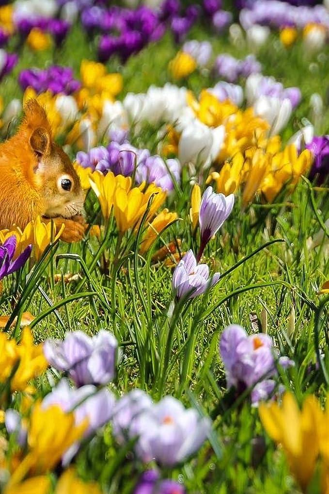 ジョイント保全ボタンCute Squirrel Playing Amidst Crocus Flowers: Notebook, 150 lined pages, softcover, 6 x 9