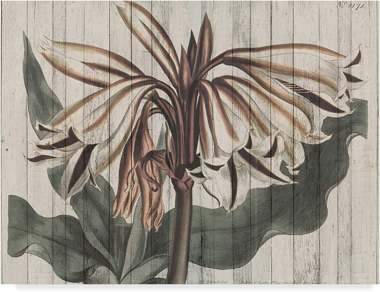 Trademark Fine Art Rustic Floral III by Studio W, 14x19
