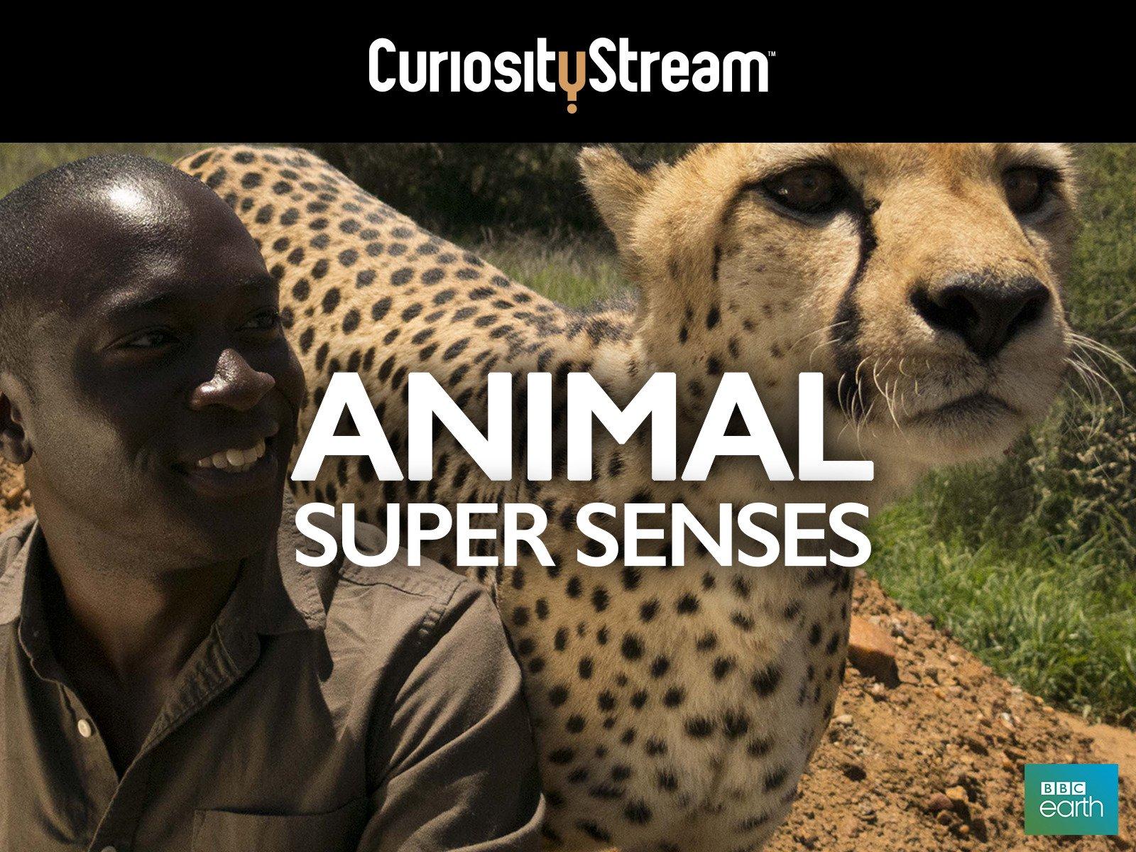 Animal Super Senses - Season 1