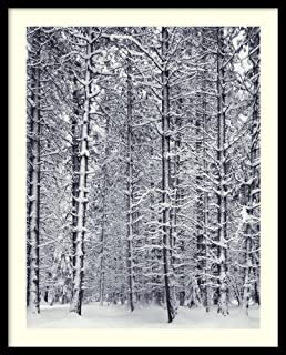 Framed Wall Art Print Pine Forest in The Snow, Yosemite National Park by Ansel Adams 25.00 x 31.00