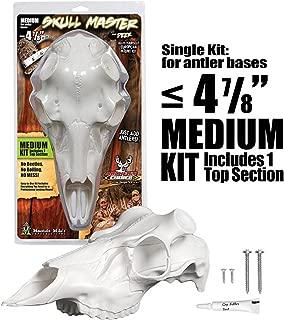 artificial skulls for european mounts