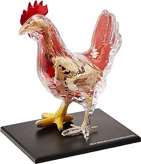 4D Master Vision Chicken Skeleton & Anatomy Model Kit, One Color
