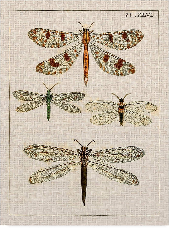 Trademark Fine Art Dragonfly Study I by Vision Studio, 14x19