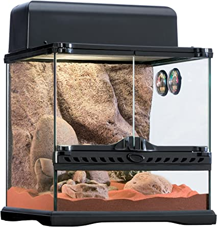 Amazon Com Exo Terra Desert Habitat Kit Reptile Terrarium Starter Kit Small Pt2650a1 Pet Terrariums Pet Supplies