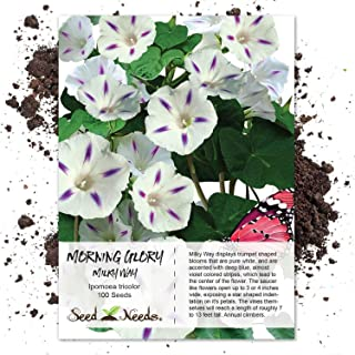Best milky way plant Reviews