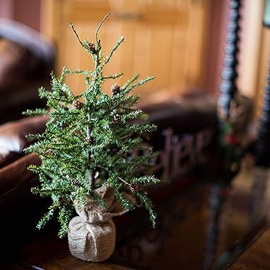 "Vickerman 18"" Caramel Pine Artificial Christmas Tree Unlit, Seasonal Indoor Home Decor with Decorative Burlap Base"