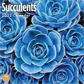 2022 Succulents Wall Calendar by Bright Day, 12 x 12 Inch, Flower Floral Cactus