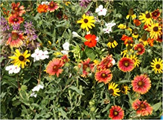Florida, Gulf Coast and Puerto Rico Wildflower Seed Mix - Annuals, Perennials