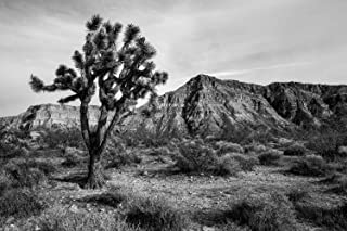 Best black and white western pictures Reviews