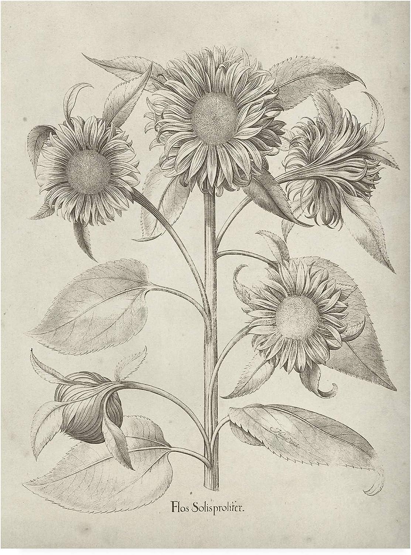 Trademark Fine Art Fresco Sunflower II by Vision Studio, 14x19