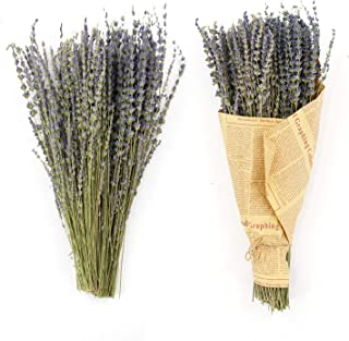 MIHUAGE Real Dried Lavender Flowers Bundles 100% Natural Dry Flower Decor for Home Decorations 2 Bundles Pack (Purple)