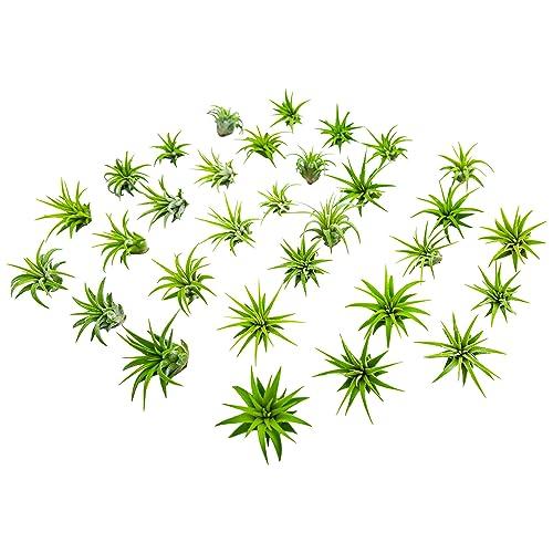 Small Terrarium Plants Amazon Com