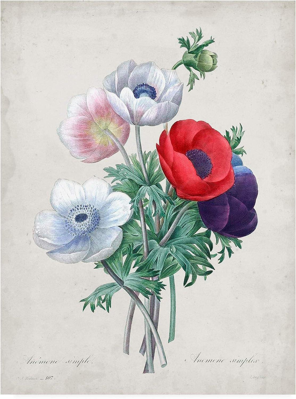 Trademark Fine Art Bouquet II by Pierre Redoute, 14x19