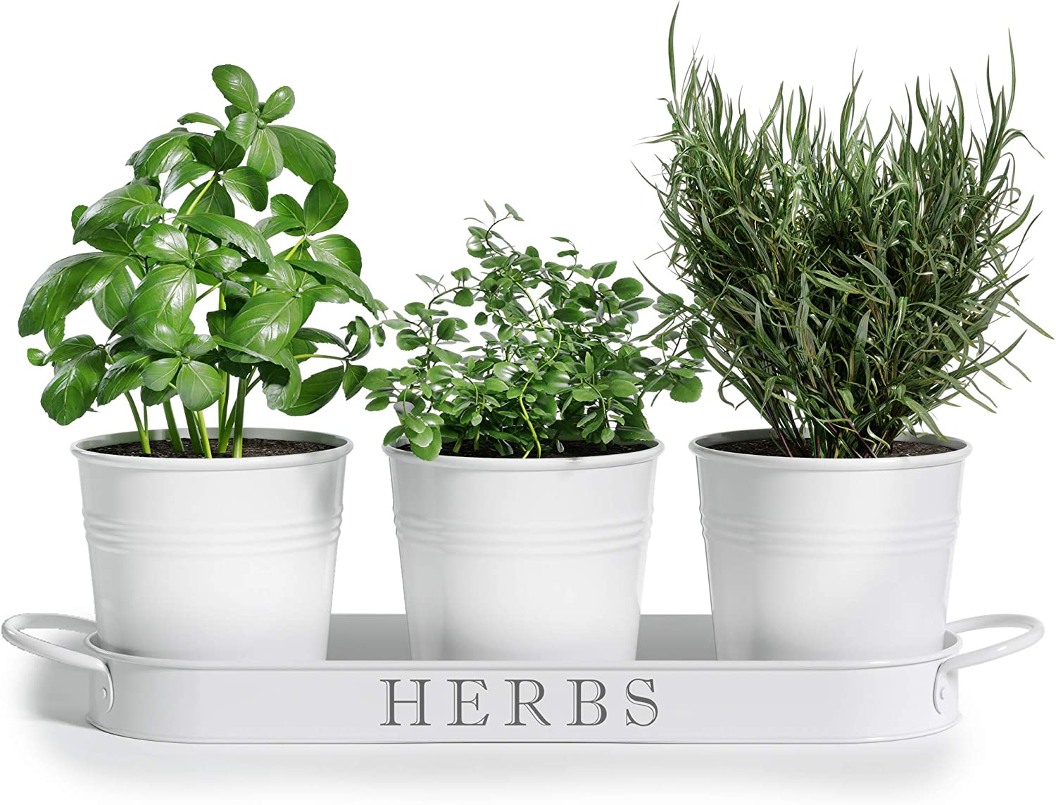 Buy Barnyard Designs Herb Pot Planter Set with Tray for Indoor ...