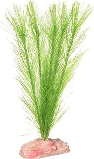 Best green foxtail aquarium plant Reviews