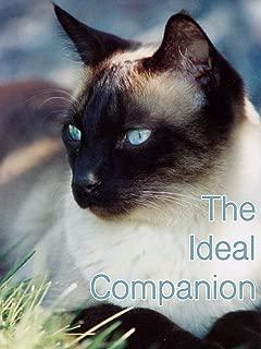 The Ideal Companion
