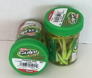 Gulp! Alive! Gulp Bait 1 INCH Chartreuse SHAD Minnow 2 jar Bundle Berkley Perch Minnows ice Fishing Bait Panfish Minnows