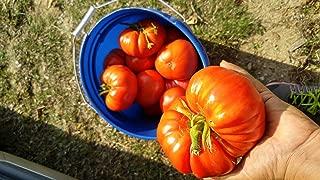 German Johnson Heirloom Tomato Seeds Rare Heirloom #6 (200 Seeds)